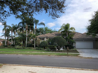 tree company tampa bay fl