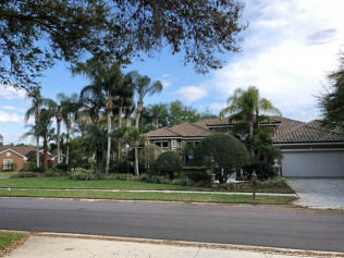 tree removal tampa bay fl