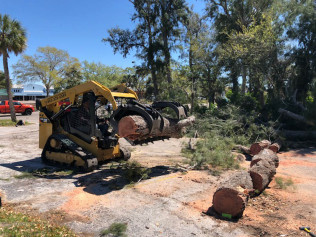 stump grinding tampa bay fl