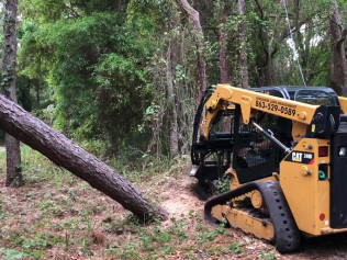 tree pruning tampa bay fl