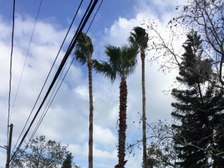 tree service tampa bay fl