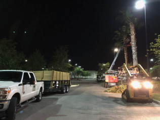 tree trimming tampa bay fl